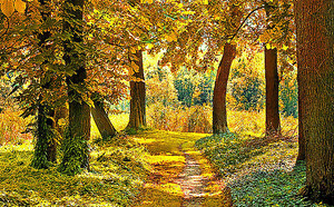 Осенний солнечный день