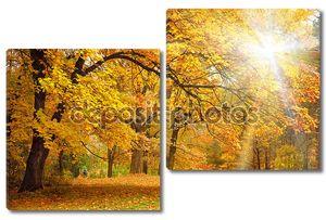 Золотая осень с солнечным светом - красивые деревья в лесу