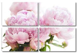 Красивый Розовый пион цветы на белом фоне