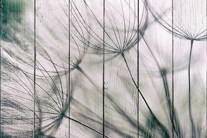 Винтажные абстрактная цветок одуванчика фон