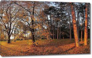 Осень в  смешанном лесу