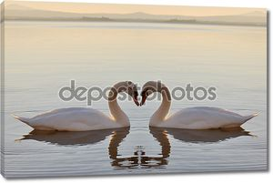 Лебеди на озере на закате