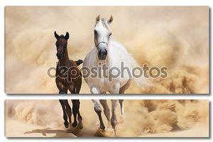 Два аравийские лошади, работает в Буря в пустыне