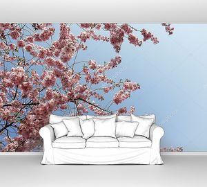 Вишневое дерево и голубое небо