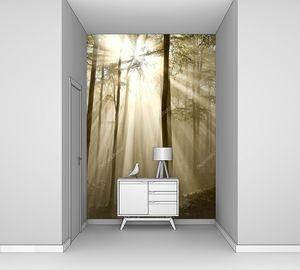 Солнечный свет падает в осенний лес