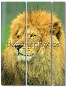 Царь зверей портрет