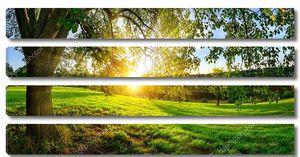 Вид на закат из-под дерева на зеленой лужайке с шипами на крыльях