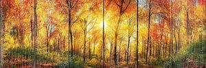 Панорама лес осенью