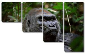 Портрет большой гориллы