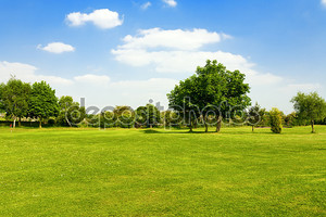Зеленая трава на поле для гольфа