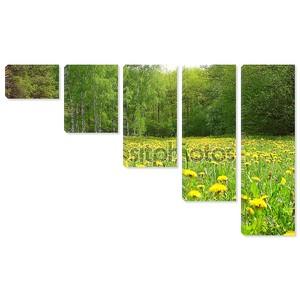 Поле с одуванчиками в лесу