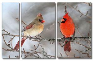 Пара Северных кардиналов в снегу