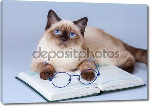 Кошка читатель