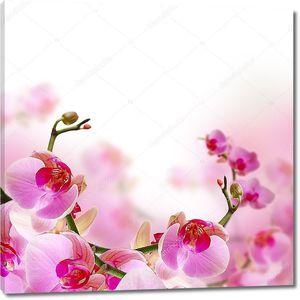 Цветы, цветут летом фон с красивых орхидей