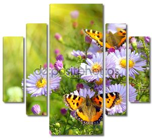 Две бабочки- шоколадницы на цветах