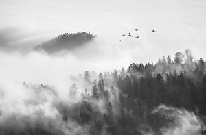 Густой лес в тумане