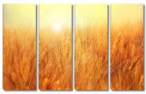 Солнечное золотистое ячменное поле