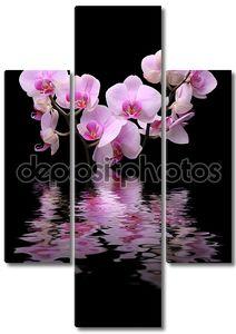 Цветок орхидеи на черном