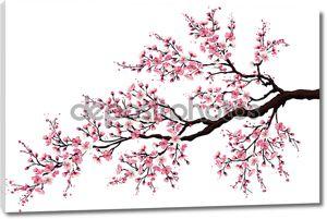 Ветви цветущей вишни