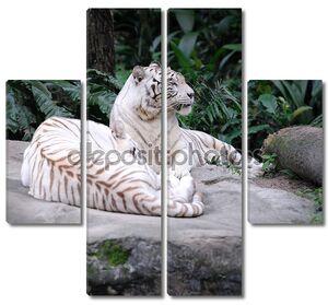 Два белых тигра