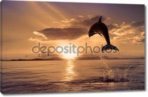 красиво Дельфин прыжки с блестящими воды