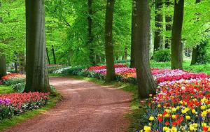 Фестиваль  разноцветных тюльпанов