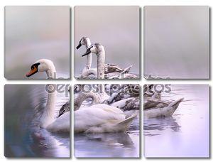 Молодые лебеди