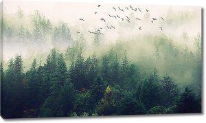 Туман окутывает вершины