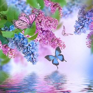 Сирень с бабочками