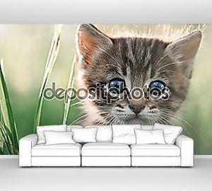 Котенок на траве крупным планом