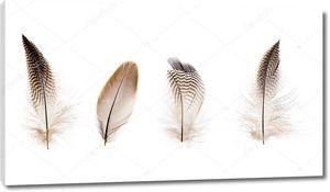 Набор красивых перьев на белом фоне