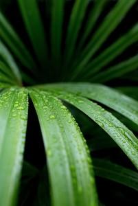 Макросъемка листа пальмы