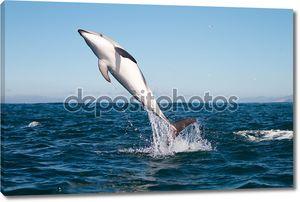 Тасманийская Дельфин прыжки