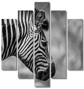 голова зебры