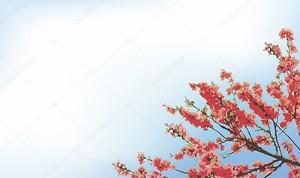 Векторный фон с цветения вишневого дерева ветви