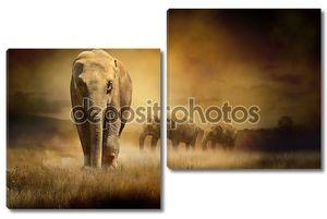 Слоны на закате