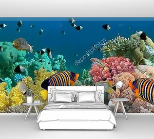 Подводные панорама с рыбами-ангелами