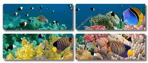 подводные панорамы с рыбы-ангелы, Коралловый риф и рыбы. красный
