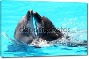 Дельфины плавают в голубой воде бассейна