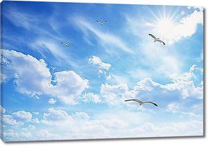Чайки высоко в облаках