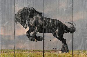 Черный жеребец Галоп фризской в закат