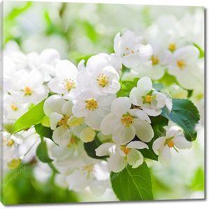 Яблоня цветет весной