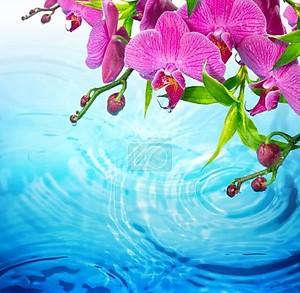 Фиолетовая орхидея на рифленая голубой воде - свежесть концепции