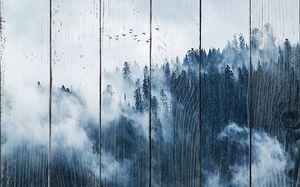 Опустившийся на лес туман