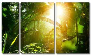 Тропический лес на восходе