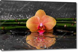 Оранжевая орхидея с ростками бамбука