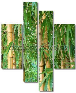 сад бамбука