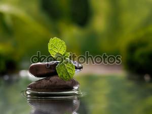 Вода, камни и свежие молодые листья