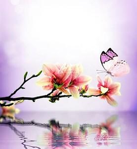Бабочка на ветке магнолии
