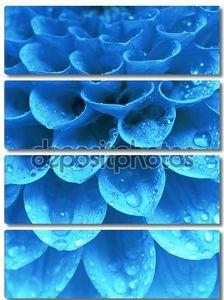 Синий цветок в каплях росы